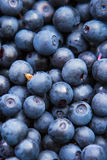Freshly picked blueberries Royalty Free Stock Images