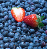 Freshly picked blueberries with strawberry Stock Photos