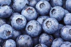 Freshly picked blueberry Stock Photos