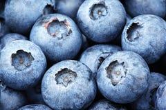 Freshly picked blueberry Royalty Free Stock Photos