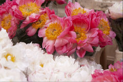 Freshly picked bouquet of peony flowers Stock Image