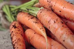 Freshly picked carrots Royalty Free Stock Image
