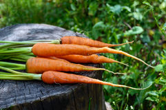 Freshly picked carrots close up on an old tree stump.  Stock Images