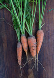 Freshly picked carrots with green tops on wooden background Stock Photo
