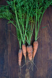 Freshly picked carrots with green tops on wooden background Stock Image