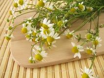 Freshly picked chamomile Stock Photo