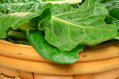 Freshly picked chard Stock Photos