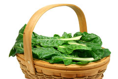 Freshly picked chard (clipping path included). Basket full of freshly picked organic chard leaves (clipping path included Royalty Free Stock Photography