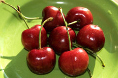 Freshly picked cherries Stock Photography