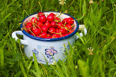 Freshly picked cherries Royalty Free Stock Photography