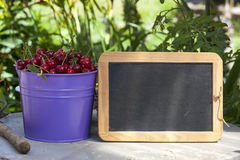 Freshly picked Cherries and a Slate Board Stock Image