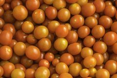 Freshly picked cherry tomatoes from above Stock Photography