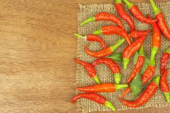 Freshly picked chili peppers on a wooden table. Preparation for the domestic processing of a crop. Royalty Free Stock Photos