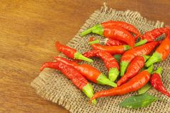 Freshly picked chili peppers on a wooden table. Preparation for the domestic processing of a crop. Stock Photography