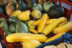 Freshly Picked Courgettes. Stock Images