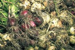 Freshly picked crop of onions. background Stock Photos