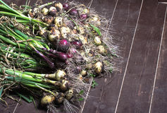 Freshly picked crop of onions. background Stock Photo