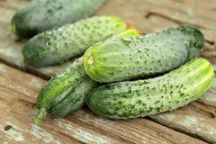 Freshly picked cucumbers Stock Photo