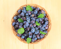 Freshly picked damson plums Stock Photo