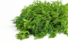 Freshly picked dill and parsley. Lie on white background freshly picked dill and parsley stock photography