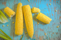 Freshly picked ear of corn, sweet maize cob Stock Image