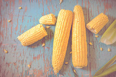 Freshly picked ear of maize, sweet corn cob Royalty Free Stock Image