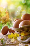 Freshly picked eggs in basket and field with chickens vertical Royalty Free Stock Photography