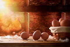 Freshly picked eggs in basket within a henhouse background Stock Photos