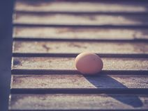 Freshly picked eggs on wooden base with frost in winter stock photography