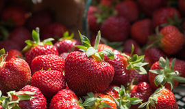 Freshly Picked Field Strawberries. A front macro view of freshly picked field strawberries sprawled out on a green cast iron patio table Stock Photography
