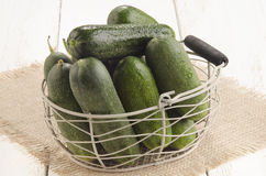 Freshly picked gherkin in a basket Royalty Free Stock Photo