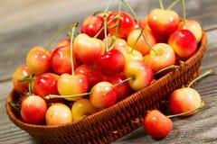 Freshly Picked Golden Rainier Cherries in Basket on Rustic Wood Royalty Free Stock Photo