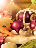 Freshly picked harvest of different autumn vegetables and fruit Stock Images