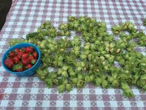 Freshly Picked. Hazelnuts bowl strawberries table harvest Stock Photos
