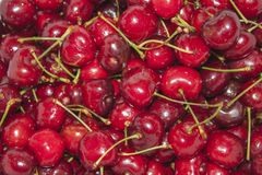 Freshly picked heap of sweet cherries. Close up Stock Images