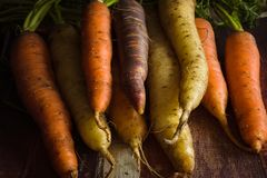 Heirloom Carrots. Freshly picked heirloom or rainbow carrots in a variety of colours shot with dark creative lighting royalty free stock photo