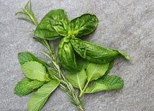 Freshly picked herbs of Mint, Rosemary, Basil Royalty Free Stock Photos