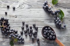 Freshly picked homegrown aronia berries. Spoon of freshly picked homegrown aronia berries and next to it. Aronia, commonly known as the chokeberry, with leaves royalty free stock photography