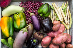 Freshly Picked Homegrown Vegetables Stock Image