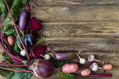 Freshly Picked Homegrown Vegetables Royalty Free Stock Photos