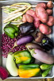 Freshly Picked Homegrown Vegetables Stock Images