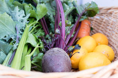 Freshly picked homegrown veggies Stock Photo
