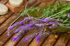 Freshly picked  lavender flowers Stock Images
