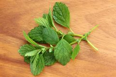 Freshly picked Lemon balm Royalty Free Stock Photography