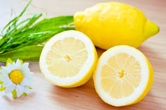 Freshly picked lemons Royalty Free Stock Photography