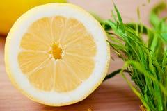 Freshly picked lemons Stock Images