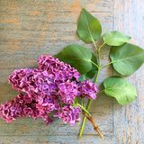 Freshly picked lilac on a wood table. Small bouquet of freshly picked purple lilacs on a wood table Royalty Free Stock Photography