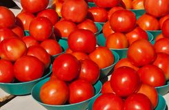 Freshly picked, ripe, local tomatoes royalty free stock photography