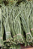 Freshly picked long green beans Stock Photos