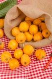 Freshly picked loquats Royalty Free Stock Photo